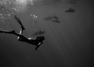 Plongée Dauphin Ile de la Réunion Kina Photo